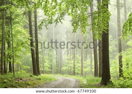 Path in the misty spring woods with a sprig of alder in the foreground. - stock photo