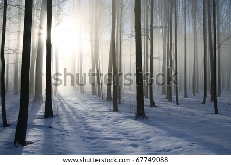 Path in the misty winter forest backlit by the morning sun. - stock photo