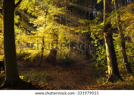 path in the old forest with beech trees, sunbeams shining through the golden autumn leaves, beauty in nature for background, wallpaper oder poster - stock photo