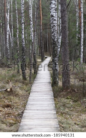 Path in the swamp - stock photo