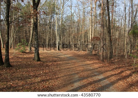 Path in the woods with a directional arrow sign