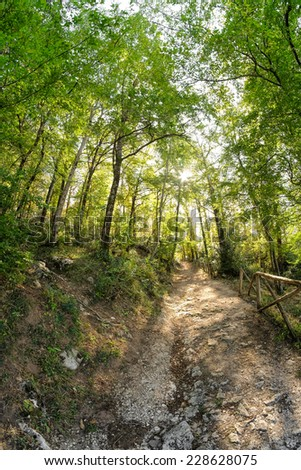 Path inside of a italian chestnut in the autumnal period - stock photo