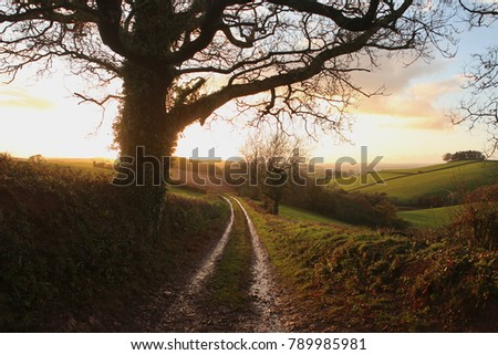 Path into sunset