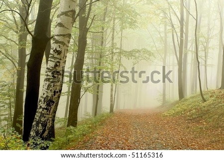 Path leading among the beech trees in early autumn forest on the mountain slope. - stock photo