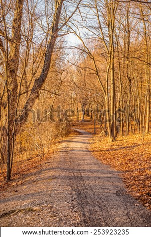 Path leading among the beech trees in late autumn forest - stock photo