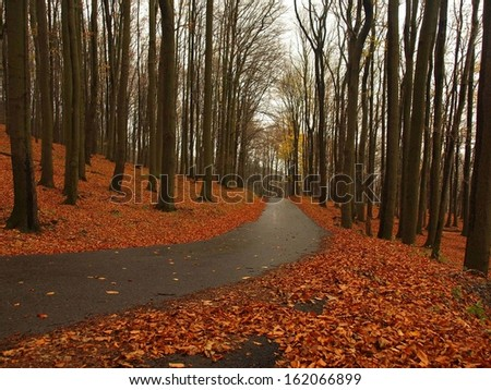 Path leading among the beech trees in late autumn forest surrounded by fog. Rainy day. - stock photo