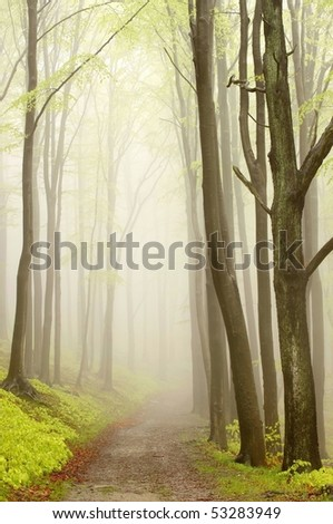 Path leading through a foggy spring beech forest on a rainy day. - stock photo