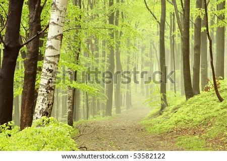 Path leading through a misty forest among the bright colors of spring leaves. - stock photo