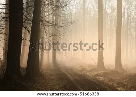 Path leading through a misty forest in the morning sunlight. - stock photo