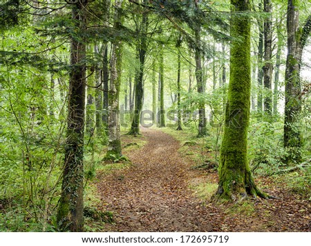 Path leading through dense green woodland at Hart Woods in Cornwall. - stock photo