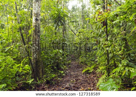 Path leading through primary tropical rainforest in the Ecuadorian Amazon - stock photo