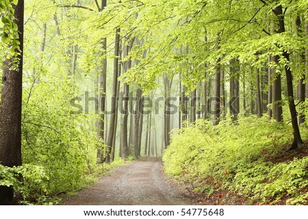 Path leading through spring deciduous forest among the alder trees. - stock photo
