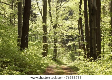 Path leading through spring forest on a sunny day. - stock photo