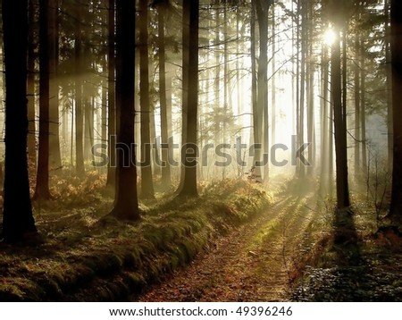 Path leading through the coniferous forest in the direction of the setting sun. Photo taken in November. - stock photo