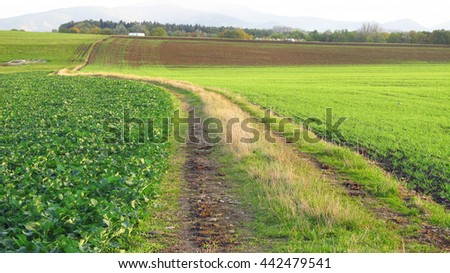 path leading through the green fields with various plants