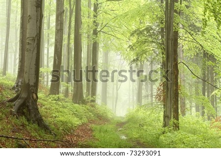 Path leading through the misty spring forest in a nature reserve. - stock photo