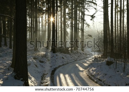 Path leading through the winter coniferous forest at dusk. - stock photo