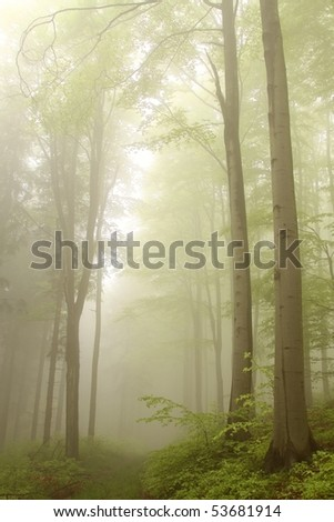 Path leads through a mysterious forest among the alder trees. - stock photo