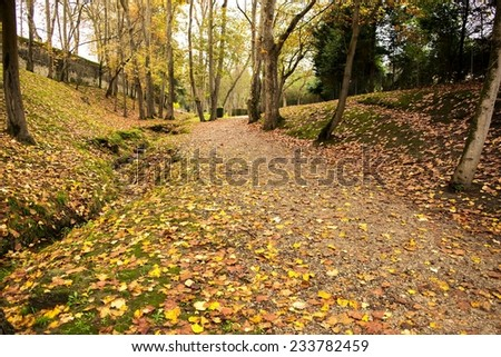 Path of a park carpeted by the fallen leaves of the trees