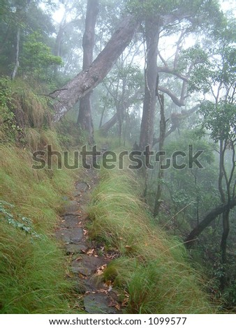 path on edge of forest cliff - stock photo
