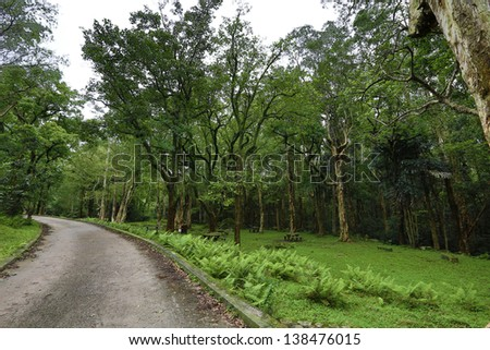 path on the forrest - stock photo