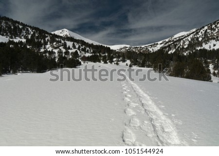 path on the snow