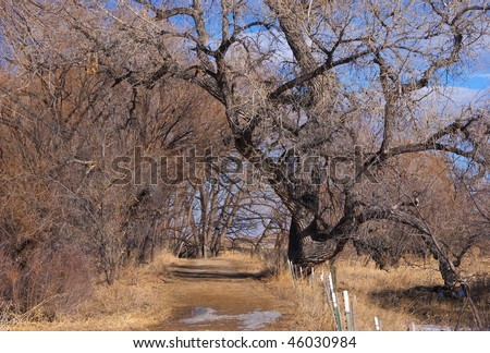 Path or small road leads forward under bare winter tree branches with melting snow and golden grasses