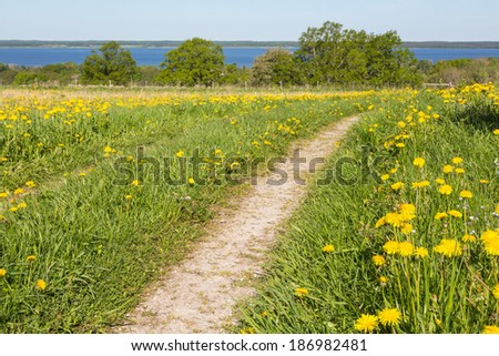 Path over a flowering meadow - stock photo