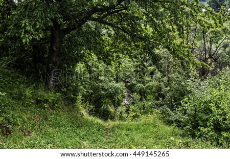 Path, overgrown with grass, leads to the house in the valley. The roof could be seen among the trees. - stock photo