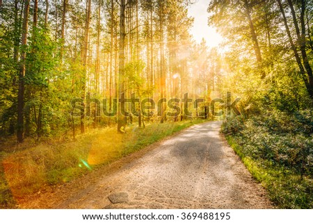 Path Road Way Pathway On Sunny Day In Summer Forest at Sunset or Sunrise. Lens flare effect. Warm colors - stock photo