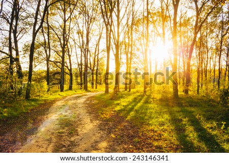 Path Road Way Pathway On Sunny Day In Summer Forest. Sunbeams Pour Through Trees. Russian Nature - stock photo