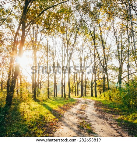 Path Road Way Pathway With Trees On Sunny Day In Autumn Yellow Forest. Sunbeams Pour Through Trees In Summer Autumn Forest - stock photo
