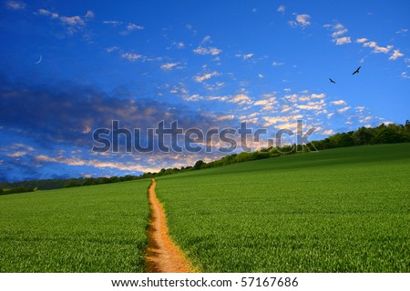 Path running straight to the horizon through young green wheat field. The rich color of the pathway picks out the colours in the attractive early evening sky - stock photo
