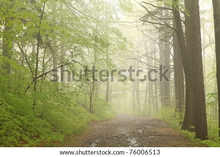 Path running through the spring woods on a foggy, rainy morning. - stock photo