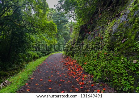 Path strewn with red flowers through a lush forest in Maui, Hawaii - stock photo