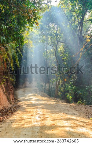 Path surrounded by an avenue of trees. Sun rays can be seen through the fog and mist. - stock photo