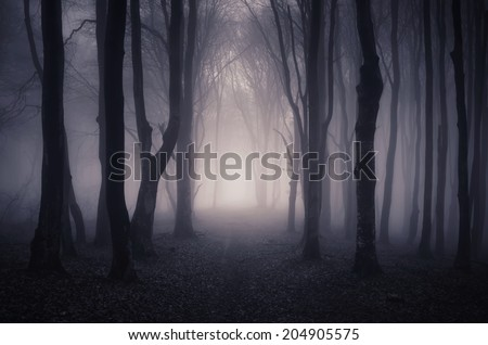 path through a dark forest at night - stock photo