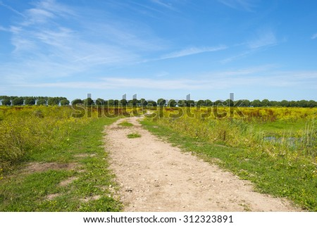 Path through a field with flowers in summer