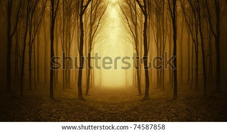 path through a golden forest at sunrise with fog and warm light - stock photo