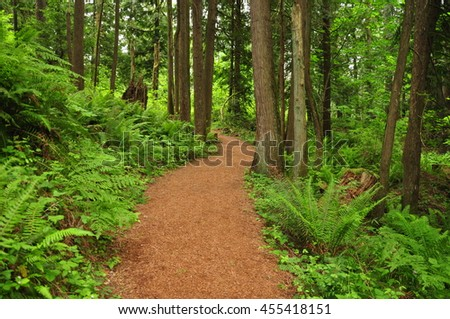 Path through a lush green forest