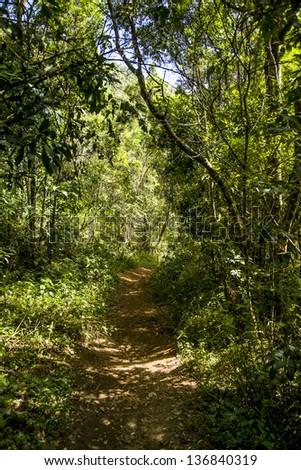 path through a tropical rain forest - stock photo