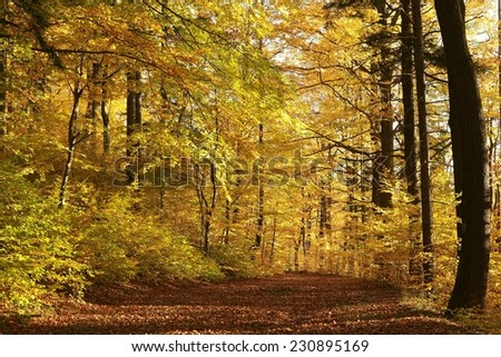 Path through autumn forest before dusk. - stock photo