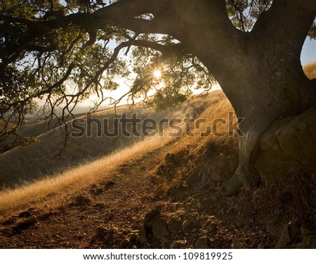 Path through beautiful, shady, hilly meadow on a sunny sunset in the East Bay Area of California - stock photo