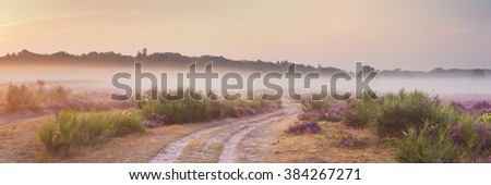 Path through blooming heather on a foggy morning at sunrise. Photographed near Hilversum in The Netherlands. - stock photo