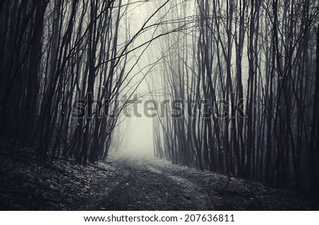 path through dark dense forest on halloween - stock photo