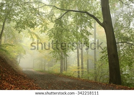 Path through deciduous forest on a foggy day. - stock photo