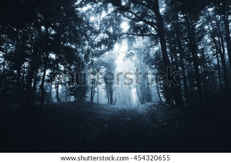 path through forest at night - stock photo