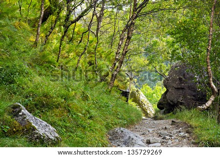 Path through forest: the Steall Gorge narrow path, in Scotland's west highlands, through vegetation and rocks. - stock photo