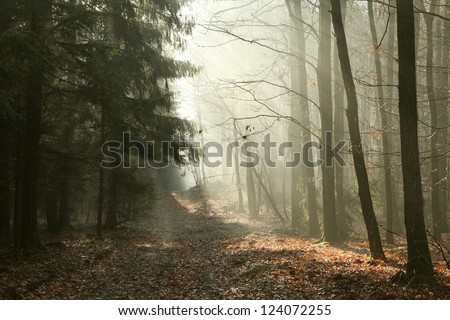 Path through late autumn forest on a foggy morning.