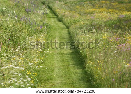 Path through meadow of wild flowers. Shallow DoF, focus at center of image. - stock photo